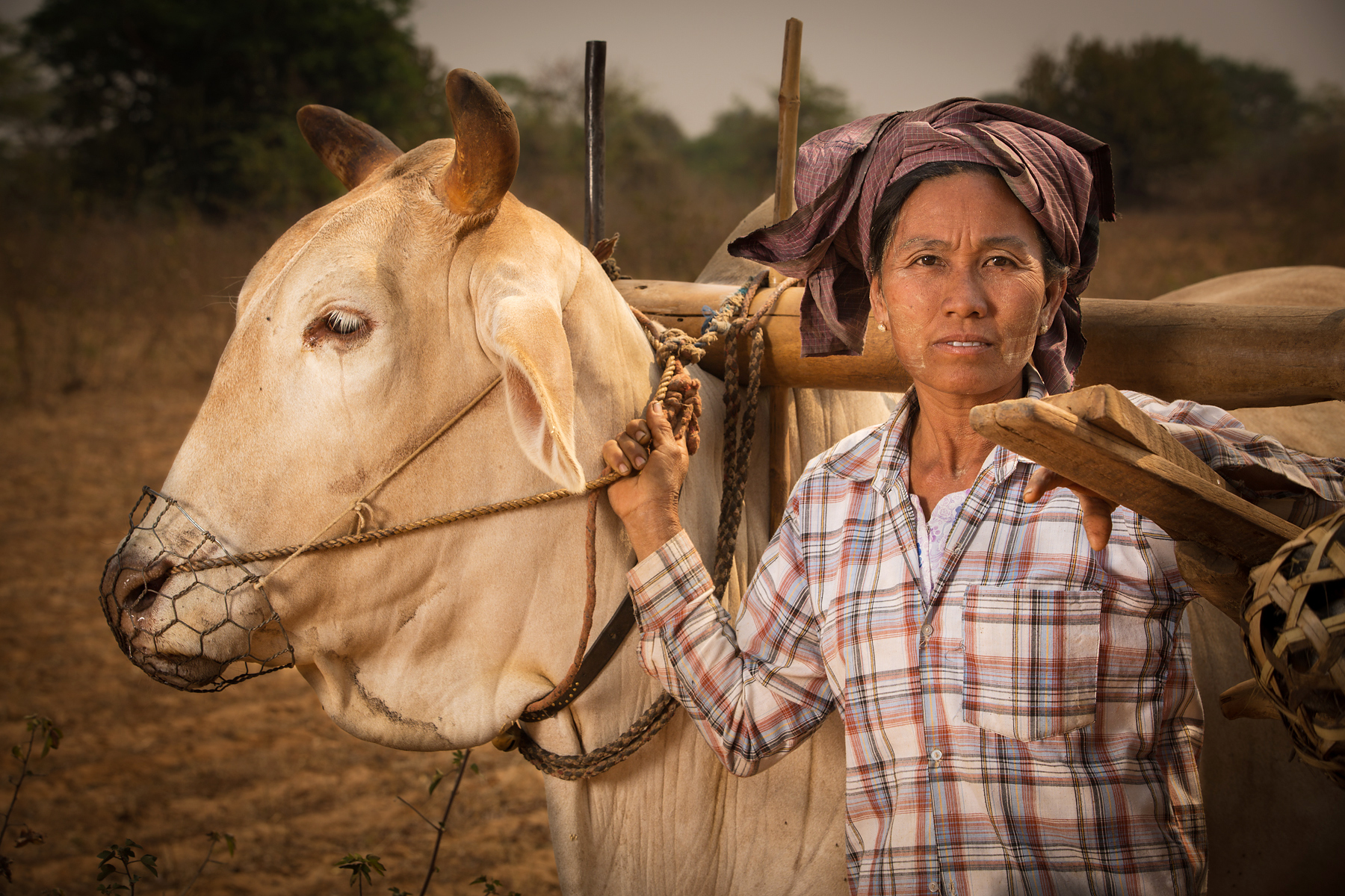 Ox Cart Farmer, Bagan, Myanmar by Dave White Photo.
