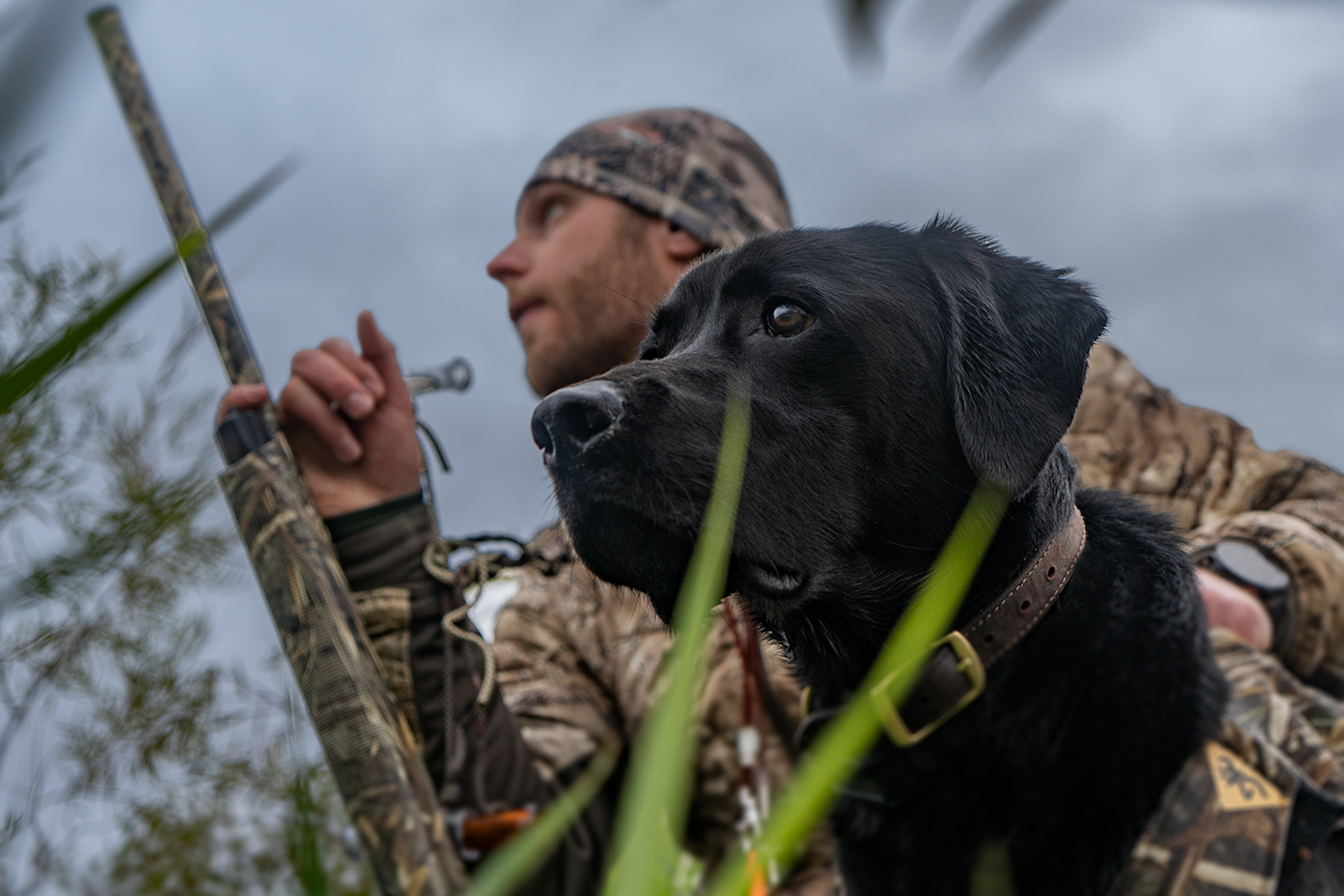 Black-Lab-Hunt-Dog-1