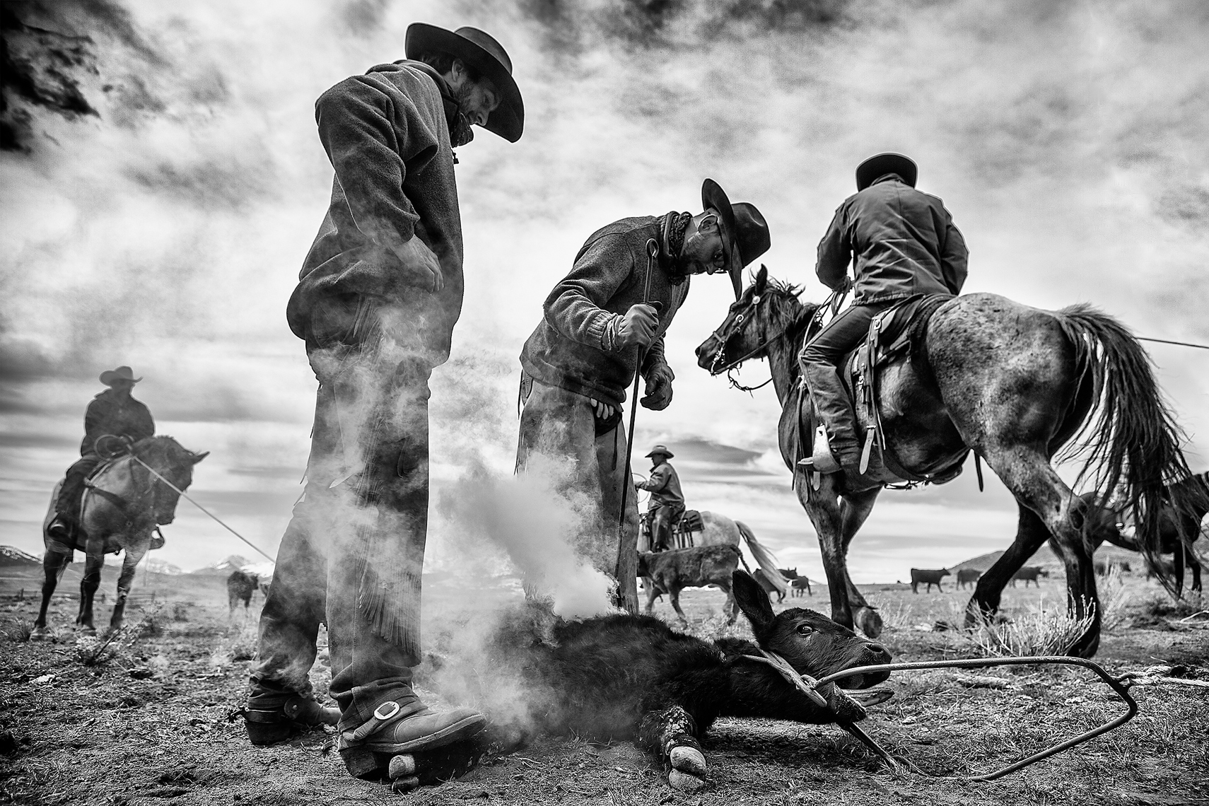 Cowboy Cattle Branding, Wilsal Montana by Dave White Phtographer