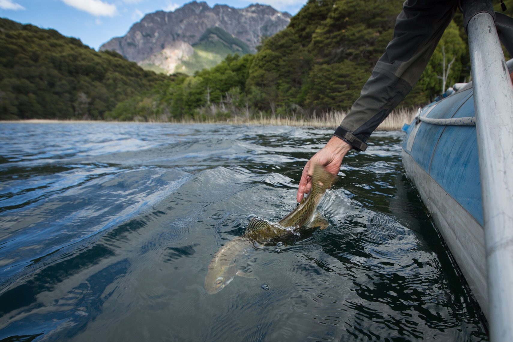 Patagonia-Trout-Release